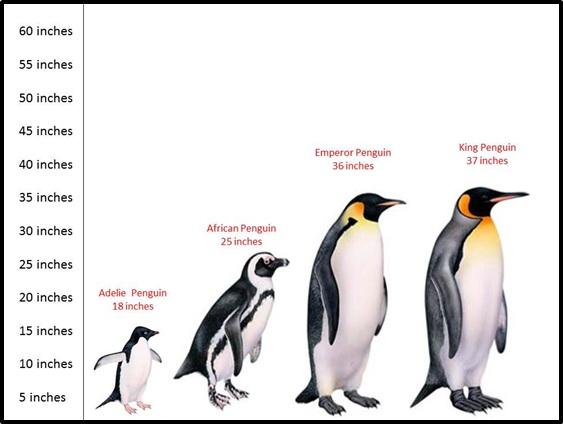 penguin=
